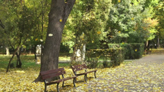 Rain of leaves, falling autumn leaves, fall season,two empty benches in the park Stock Footage