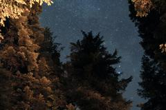 Trees and the night sky Stock Photos