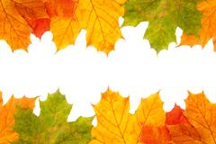 Stock Photo of autumn maple leaves frame