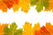 Stock Photo of autumn maple leaves frame