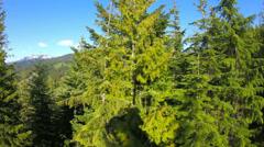 Ski Lift Ride Passing Trees Fisheye - stock footage
