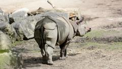 Rhinoceros, walk in a sunny day Stock Footage