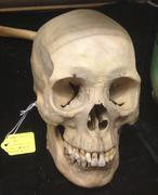 Human Skull 2 - stock photo