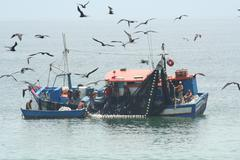 Fishing Boat Surrounded by Birds - Medium Close up - stock photo