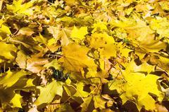 Fallen leaves carpet - stock photo