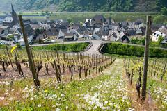 Stock Photo of vines at the moselle in germany