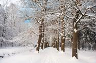 Stock Photo of snow in the forest