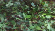 Stock Video Footage of Natural cooperation, ant hill, diligent ants moving caring green leaf