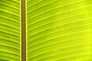 Texture of banana leaf Stock Photos