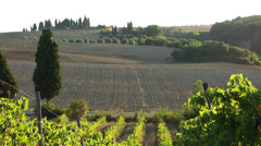 Views of a Tuscan Vineyard (2 of 11) - stock footage