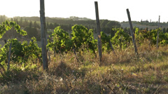 Views of a Tuscan Vineyard (10 of 11) Stock Footage
