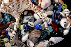 sea-shells - stock photo