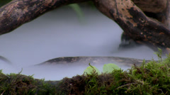 Moss, tree and fog in the swamp Stock Footage
