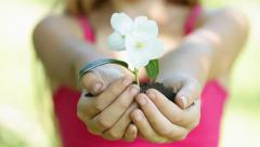Teen Girl Hands Holding Blooming Plant White Jasmine Flower HD Stock Footage