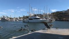Pelicans fly at Marina Stock Footage