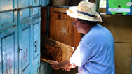 Stock Video Footage of Beekeeper and beehive