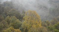 Forest and mist - clouds Stock Footage