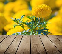 asteraceae in a botanical garden and empty wooden deck table. - stock photo