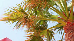 Branches of Palm trees swaying in the wind Stock Footage