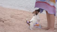 Jack russel and beautiful girl on vacation Stock Footage