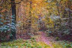 Autumn park landscape Stock Photos