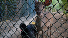 Cartagena bay zoo (Cruise ship terminal), Colombia, baby deer and bird Stock Footage