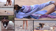 Stock Video Footage of jack russel and beautiful girl on vacation