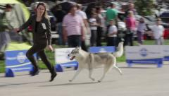 Dog Show Stock Footage