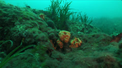 Corals attached to rock.MP4 - stock footage