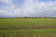 autumn arable field - stock photo