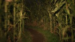 Scary Corn Maze Point of View Stock Footage