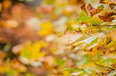autumn leaves abstract background - stock photo