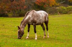 herd of horses pasture in a valley with green hill - stock photo