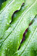 Abstrakti lähikuva vihreä kasvi lehtiä, joissa sadepisarat Kuvituskuvat