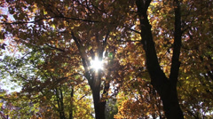 Autumn in the forest, fall season, sun shinning though the trees landscape Stock Footage