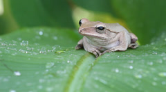 Frog in the nature wild Stock Footage