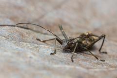 Assassin bug Stock Photos