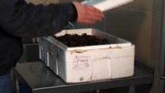 Box with mussels Stock Footage