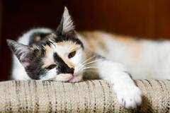 Bored cat Stock Photos