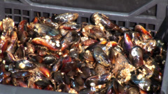 Mussels Stock Footage