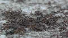 Amid Nature - Ant Swarm - stock footage