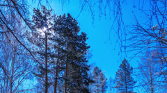 Stock Video Footage of Moonlit Night on the cordon. Stars leave traces. Time Lapse