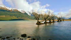Timelapse Rows of Willow Trees And Cloud At Glenorchy HD1080p Stock Footage