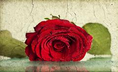 Grunge retro background with red rose Stock Photos