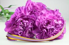 Stock Photo of closeup of beautiful purple clove