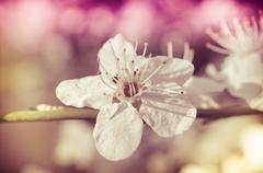 Stock Photo of spring blossom of flowers