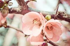 spring blossom of flowers - stock photo