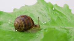Snail shot out its horns - stock footage