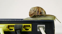 Snail crawling slowly across router network hub Stock Footage