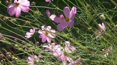 Beautiful purple flowers in the wind, summer day, park, romantic garden Stock Footage